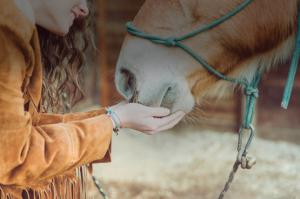 Качественные гели для лошадей по доступным ценам